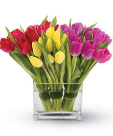 Trio Of Tender Tulips