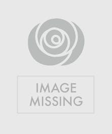 Merry Poinsettia Double Basket