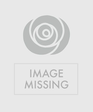 Get this tulip arrangement arranged in a modern glass vase!