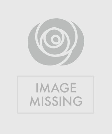 Give these lovely white roses for any occasion!