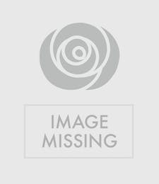 Triple Rose Vase and Teddy Bear
