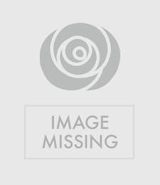 An Enchanted Rose