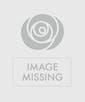 10 Purple Tulips